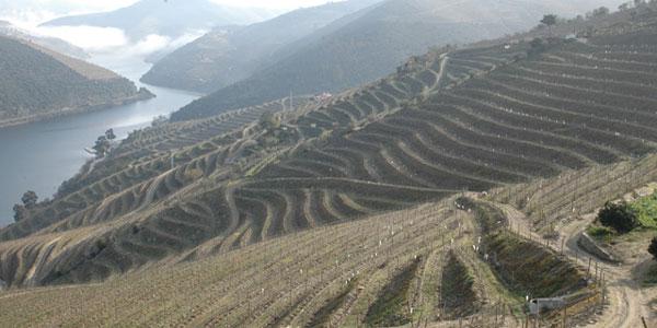 Les vignes dans la vallée du Douro