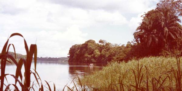 Le Wouri à Yassem en amont de Douala