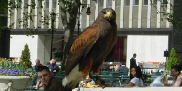Bryant Park (manhattan) promenade de l'aigle royal
