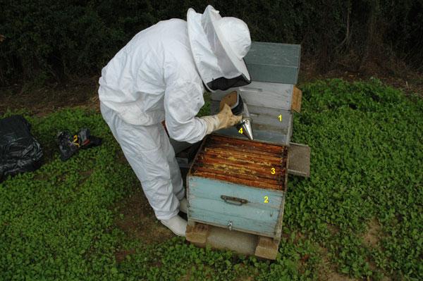 La ruche et la préparation de la récolte