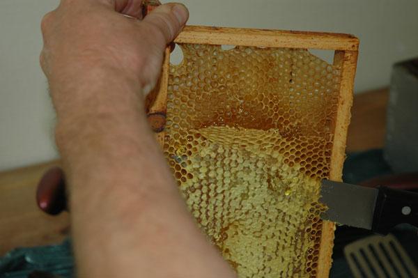 Récupération du miel