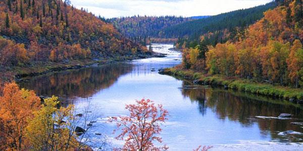 Couleurs d'automne en Laponie