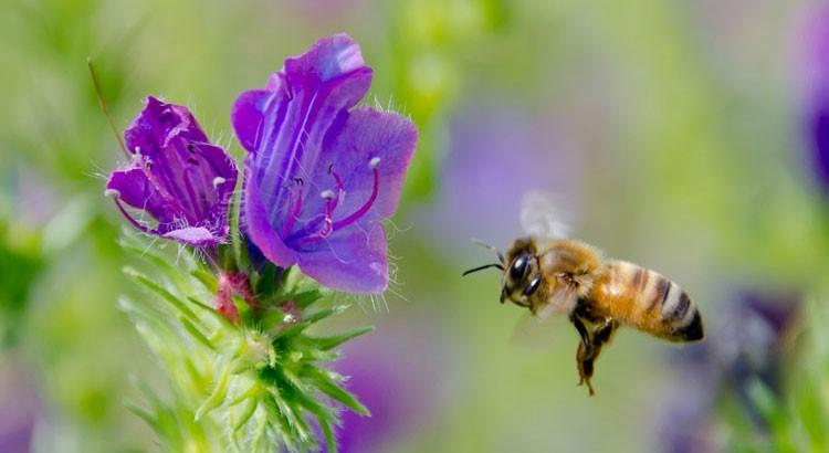 Nature : Le vol des abeilles