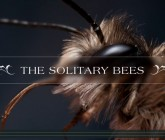 Les abeilles sauvages de Grande-Bretagne