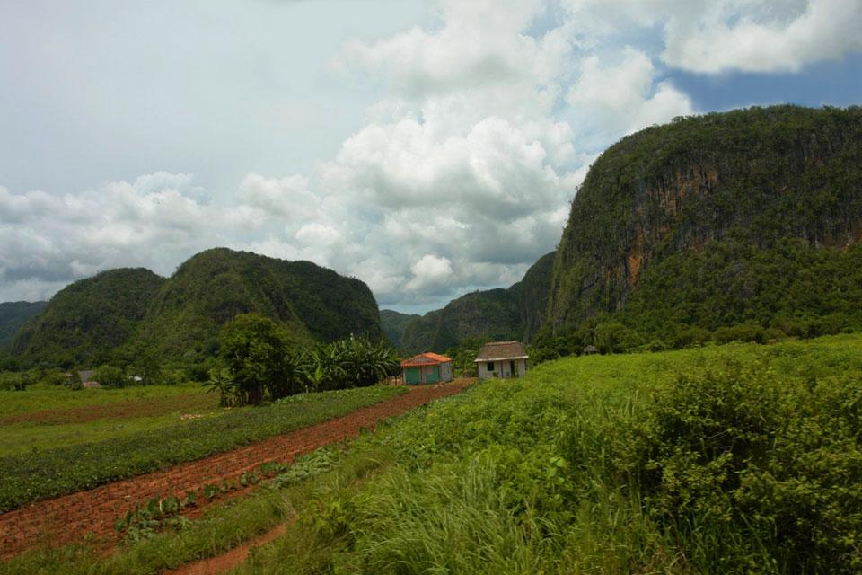 Conseil pour un voyage à Cuba - découverte des champs de tabac entre La Havane et Pinar del Rio