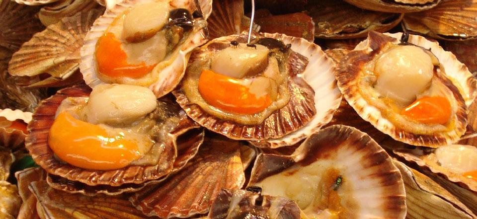 Deauville et la gastronomie : les coquilles saint-jacques