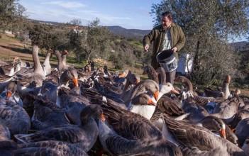 Le foie d'oie naturel façon Eduardo Sousa