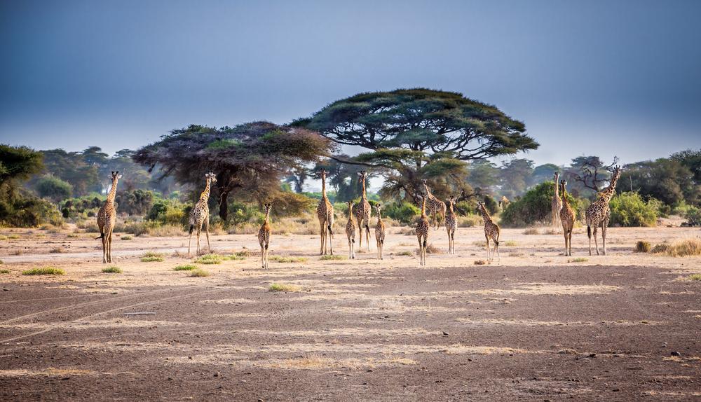 Tanzanie - parcs Nationaux : Arusha