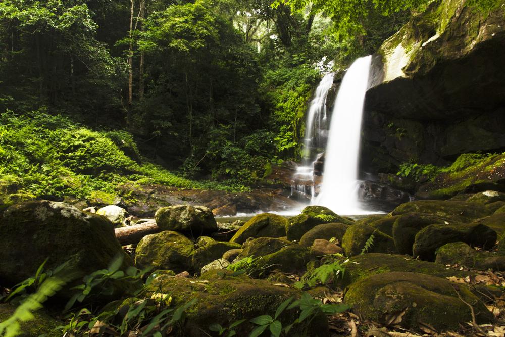 Tanzanie - parcs Nationaux : Udzungwa