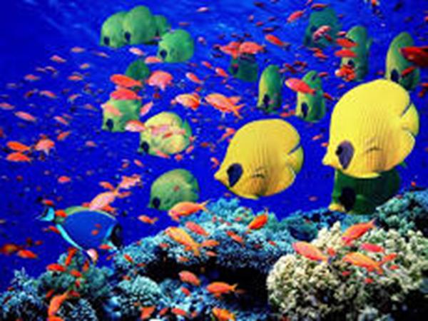 jean-gaches - Circuit aux Grenadines : poisson multicolore