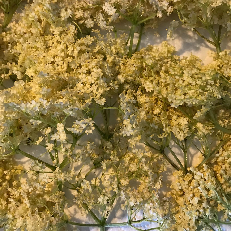 recette-beignets-fleurs-de-sureau-04